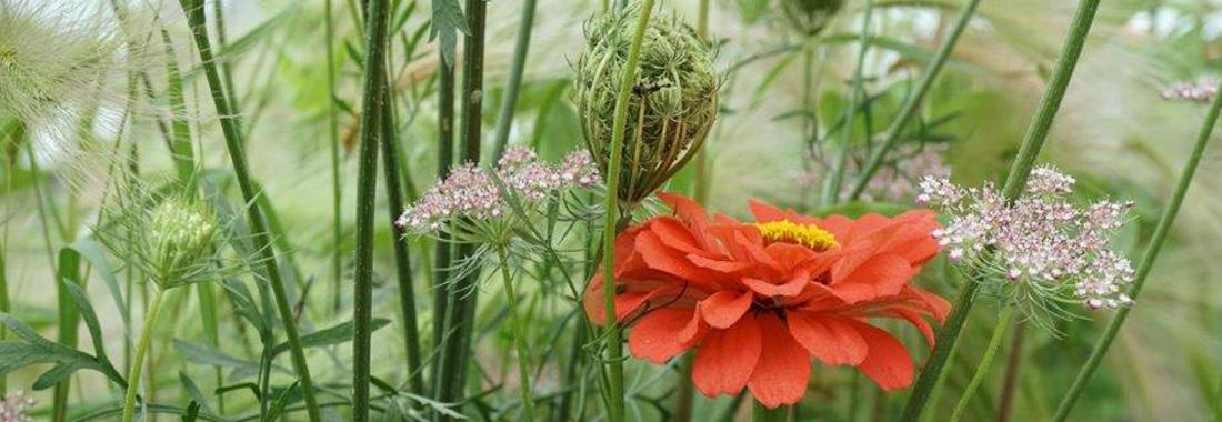 Nahaufnahme von Gräsern und einer roten Blüte auf einer Wiese